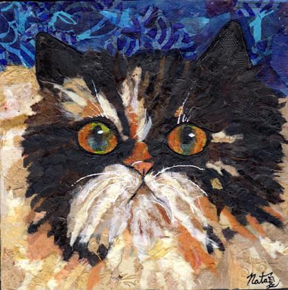 Tibbles is a Persian Cat