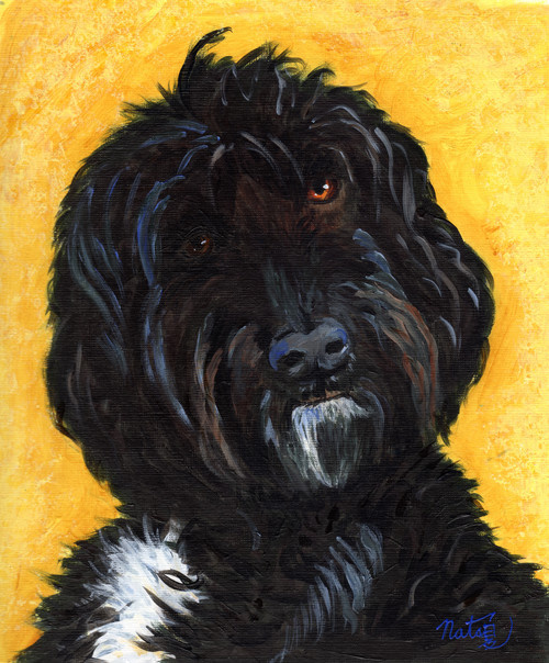 Labradoodle, Charley