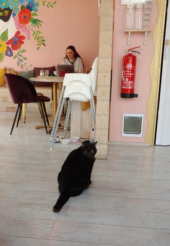 Cat Cafe, Iceland