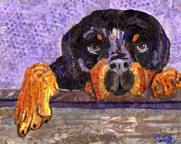 Collage portrait of a rottweiler