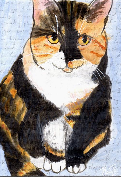 portrait of Miss Cali, a calico cat